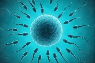如何增强精子活力