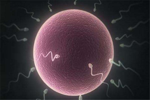 提高精子活力.jpg