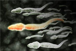 精子少是什么原因?如何提高精子质量?