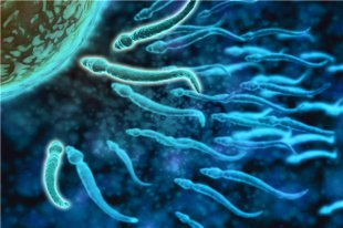 怎么增加精子数量和质量?这四点需要注